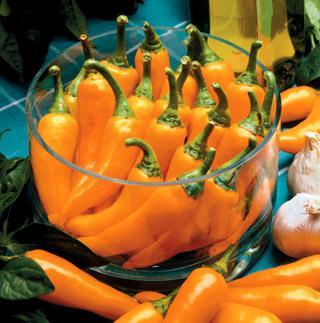 Pepper Bulgarian Carrot