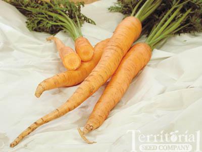Autumn King Carrots