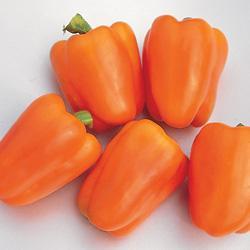 Sweet Pepper Gourmet