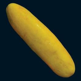 Jaune Dickfleischige Cucumber