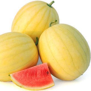 Watermelon Faerie Hybrid