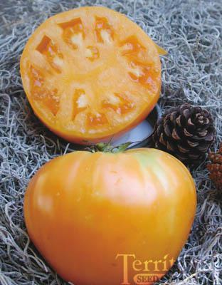 Orange Oxheart Tomato Conventional & Organic