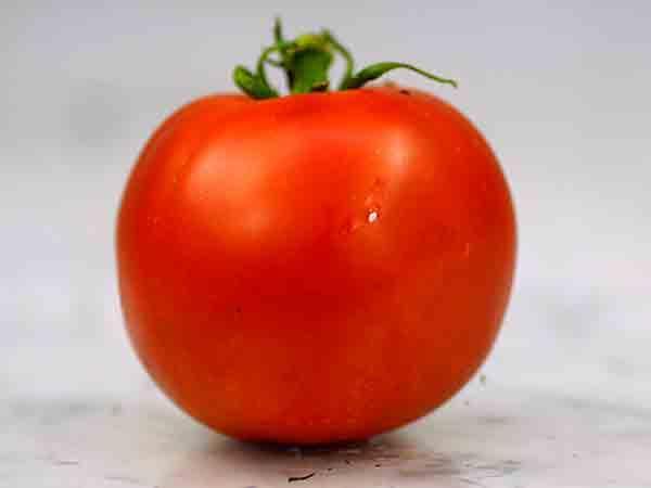 Bonny Best Tomato