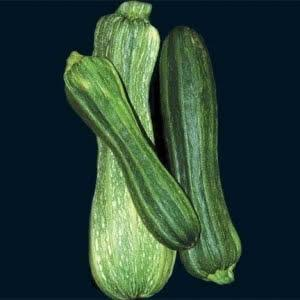 Squash, Zucchini, Costata Romanesca