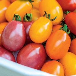 Tomato Rainbow Blend F1 Hybrid