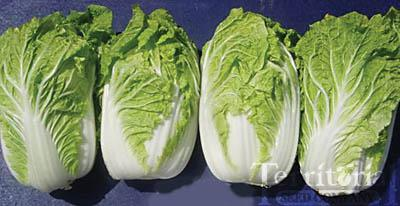 Tenderheart Chinese Cabbage