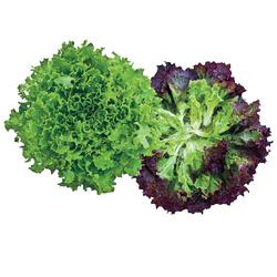 Multileaf Mix Leaf Lettuce