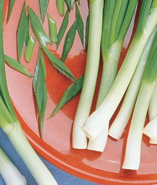 Onion, Evergreen Long White Bunch Organic
