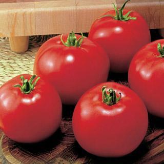 Park's Early Moneymaker Tomato Plant