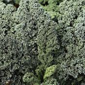Vates Blue Curled Kale