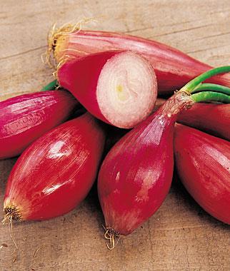 Onion, Salad Red