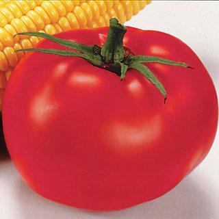 Better Boy Hybrid Tomato Annual Plant