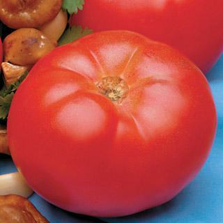 Tomato Beefmaster Hybrid