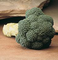 Marathon (F1) Broccoli