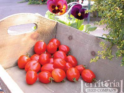 Tomatoberry Garden Tomato