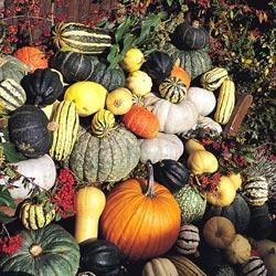 Gourds 'Jim Jams'