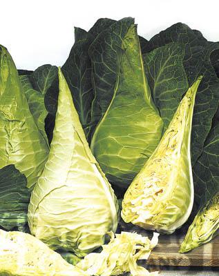 Filderkraut Cabbage