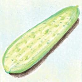 De Bourbonne Cucumber