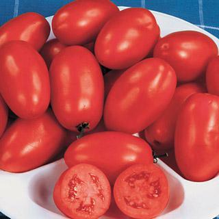 Tomato Roma Organic