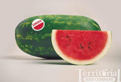 Sangria Watermelon