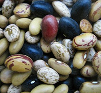 Bean, Dry Bush Bean Mix