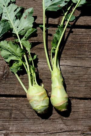 Early White Delicacy Kohlrabi