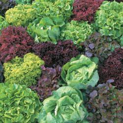Lettuce Ultimate Mixed