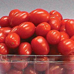 Jelly Beans (VF) Hybrid Tomato