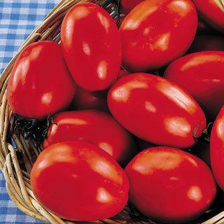 Grafted Tomato San Marzano