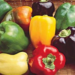 Sweet Bell Hybrid Mix Sweet Pepper