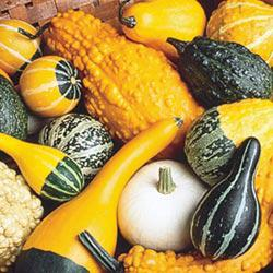 All-Size Gourd Mix
