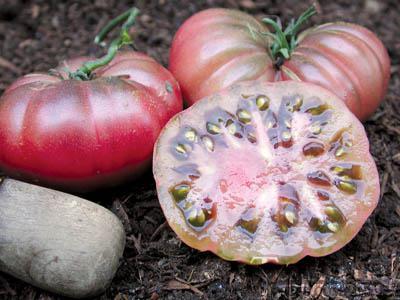 Purple Calabash Tomato Organic