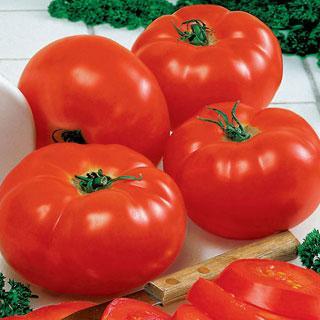 Big Beef Hybrid Tomato Annual Plant