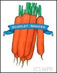 Organic Scarlet Nantes Carrot Seed