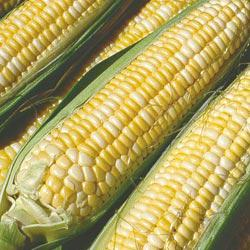 Peaches & Cream (se) Hybrid Sweet Corn