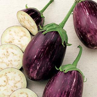 Eggplant Twinkle