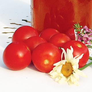 Nectar Hybrid Tomato Plants
