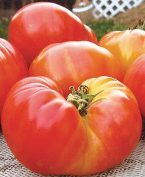 Tomato, Pineapple, Organic