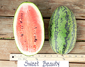 Watermelon Sweet Beauty Hybrid