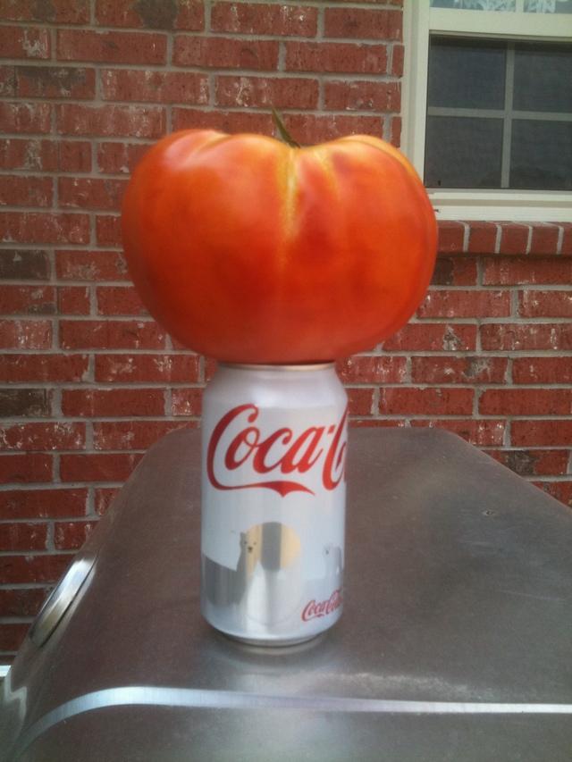 Tomato, Big Daddy Hybrid